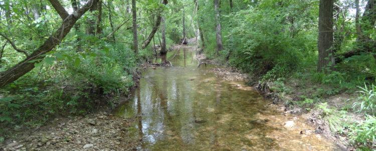 Calvey Creek Riparian Mitigation Site – 2017