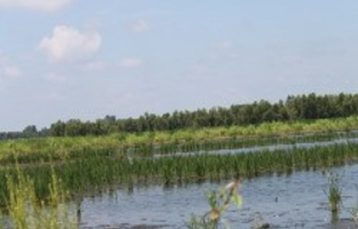 Riverlands Wetland Mitigation Site – 2010