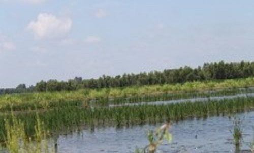 Riverlands Wetland Mitigation Site – 2010