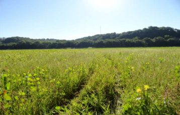 City of Chesterfield Mitigation Site – 2013